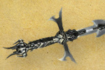 Diablo3_Quinquennial_sword_Transmog_15_Ingame_Sword_th